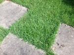 our lush lawn